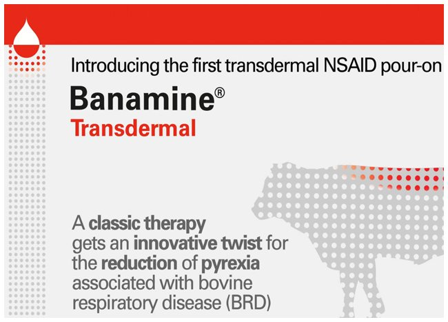 Mode of action video on the first transdermal NSAID pour-on product for pain control in cattle