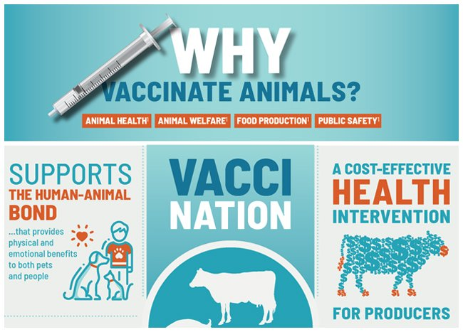 Why vaccinate animals infographic